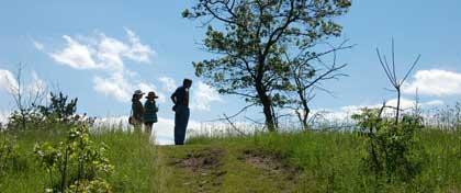 Part of the Black Oak Savanna in Alderville, Northumberland County, Ontario