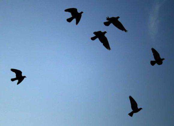 bird silhouettes – photo courtesy of Ildar Sagdejev