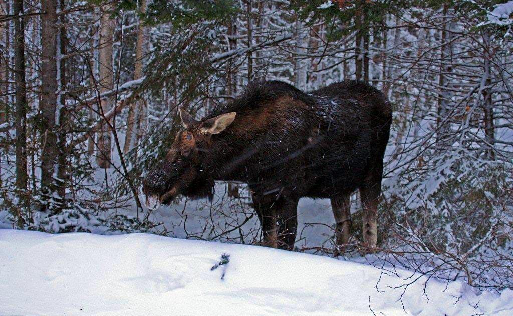 Winter Wildlife In Algonquin Provincial Park