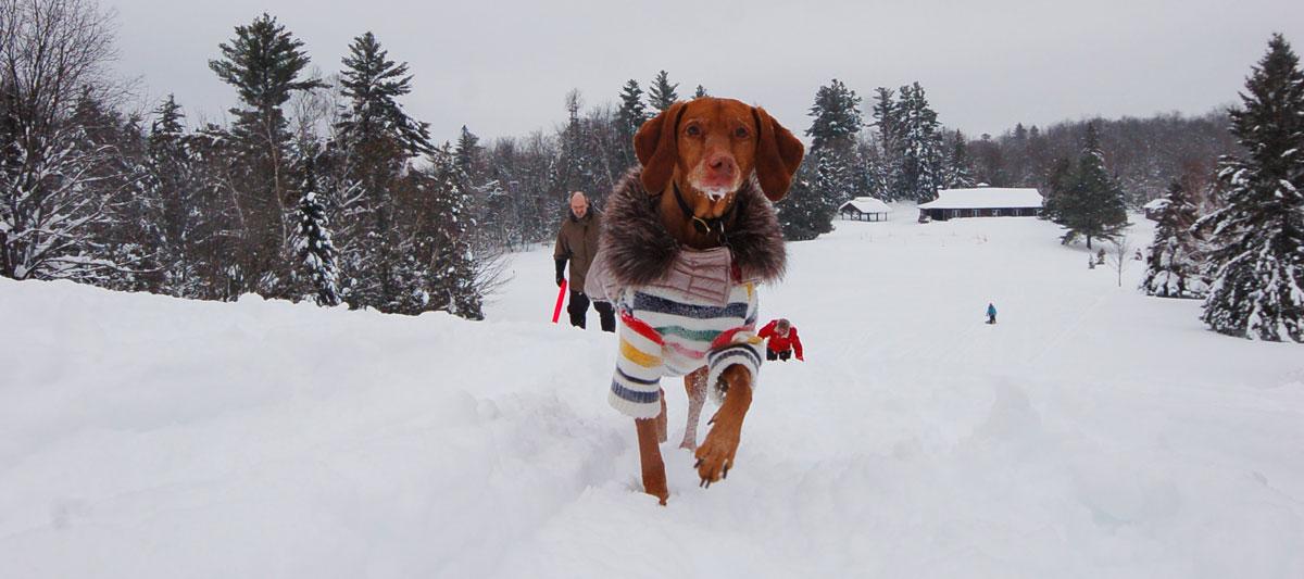 toboggan dog