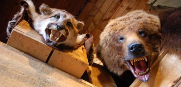 stuffed-animals-at-Fort-Whoop-Up-Lethbridge