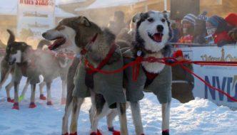 Beautiful Yukon winter: Resistance is futile