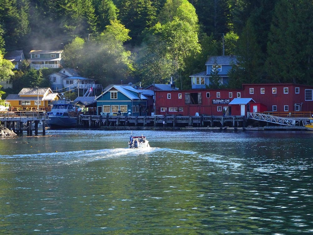 whale watching out of Telegraph Cove