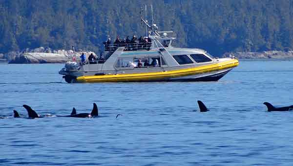 whale watching boat