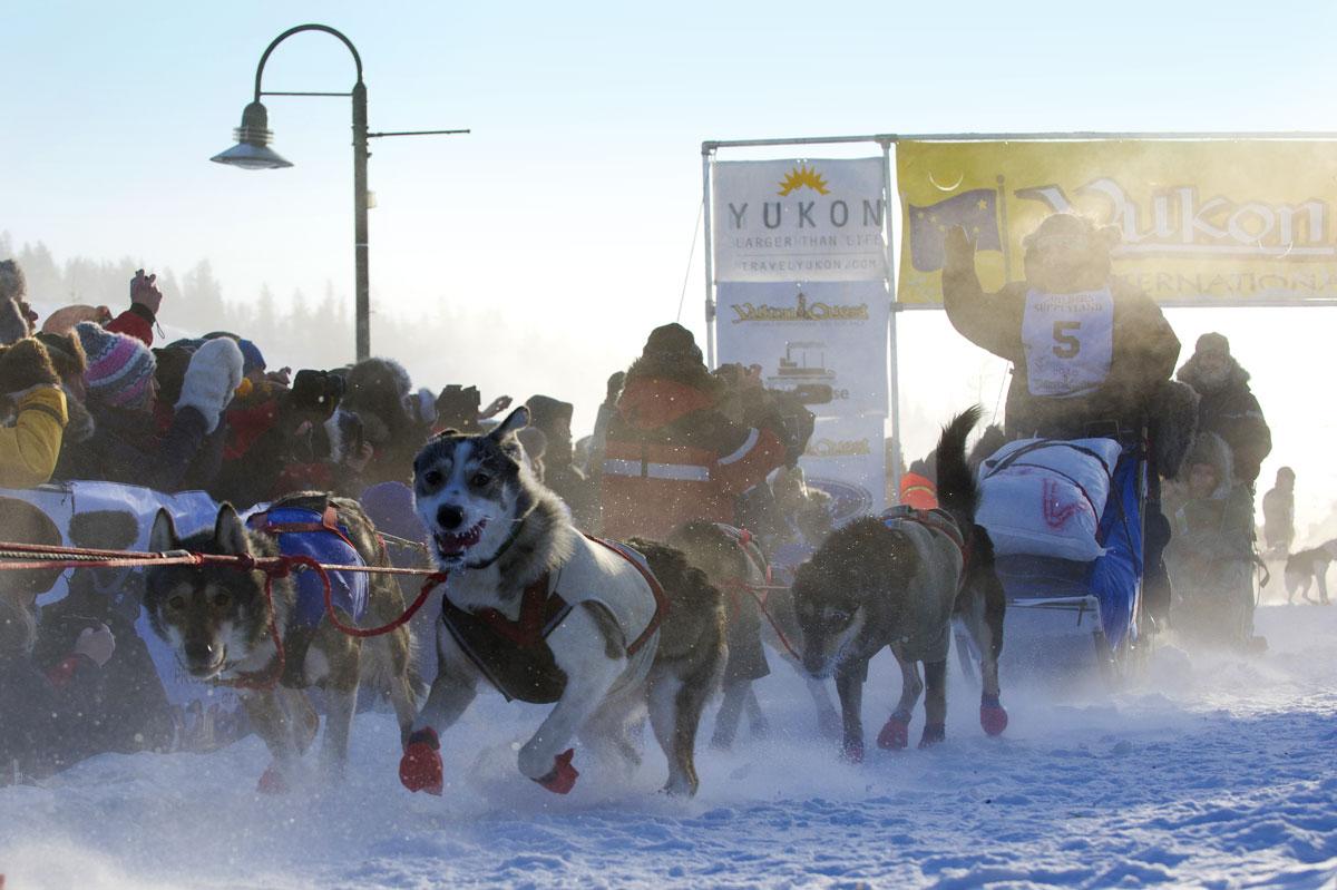 Yukon sled dog race mushers
