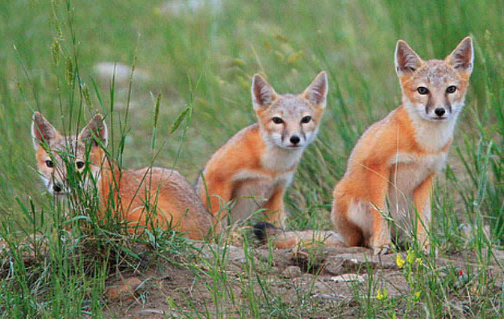 WWF A Canadian problem – Canada's wildlife is on a troubling decline