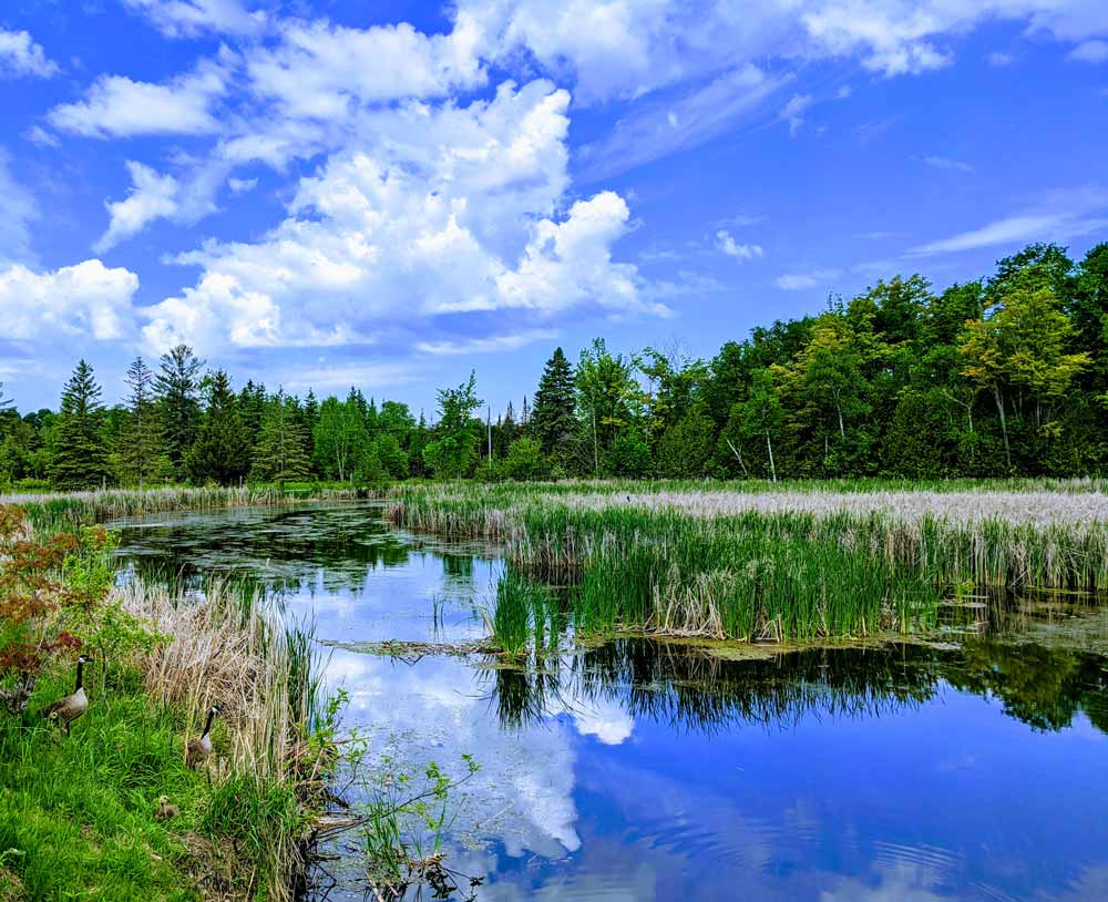 Blackwater Ontario - Beaver River wetland